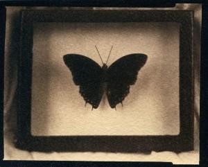 RachelCzajkowski_butterfly