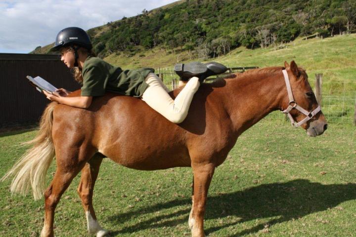 summer-reading-horse1